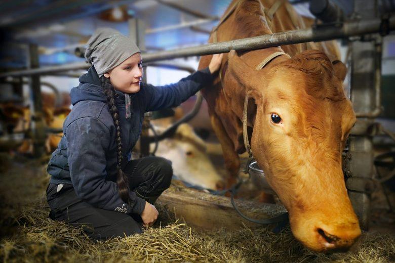 Nainen kyykistynyt lehmän viereen, joka on kiinni parresssa.